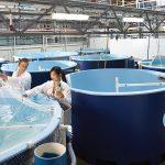 Curtin Malaysia hosting second aquaculture webinar